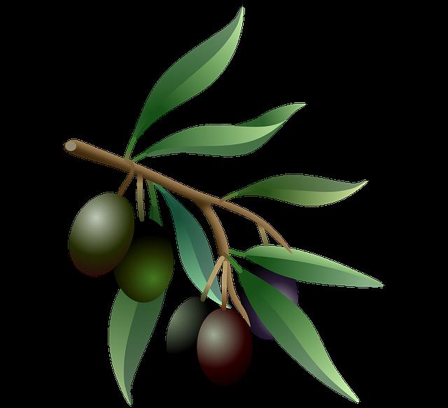 L'Olivans : huile artisanale
